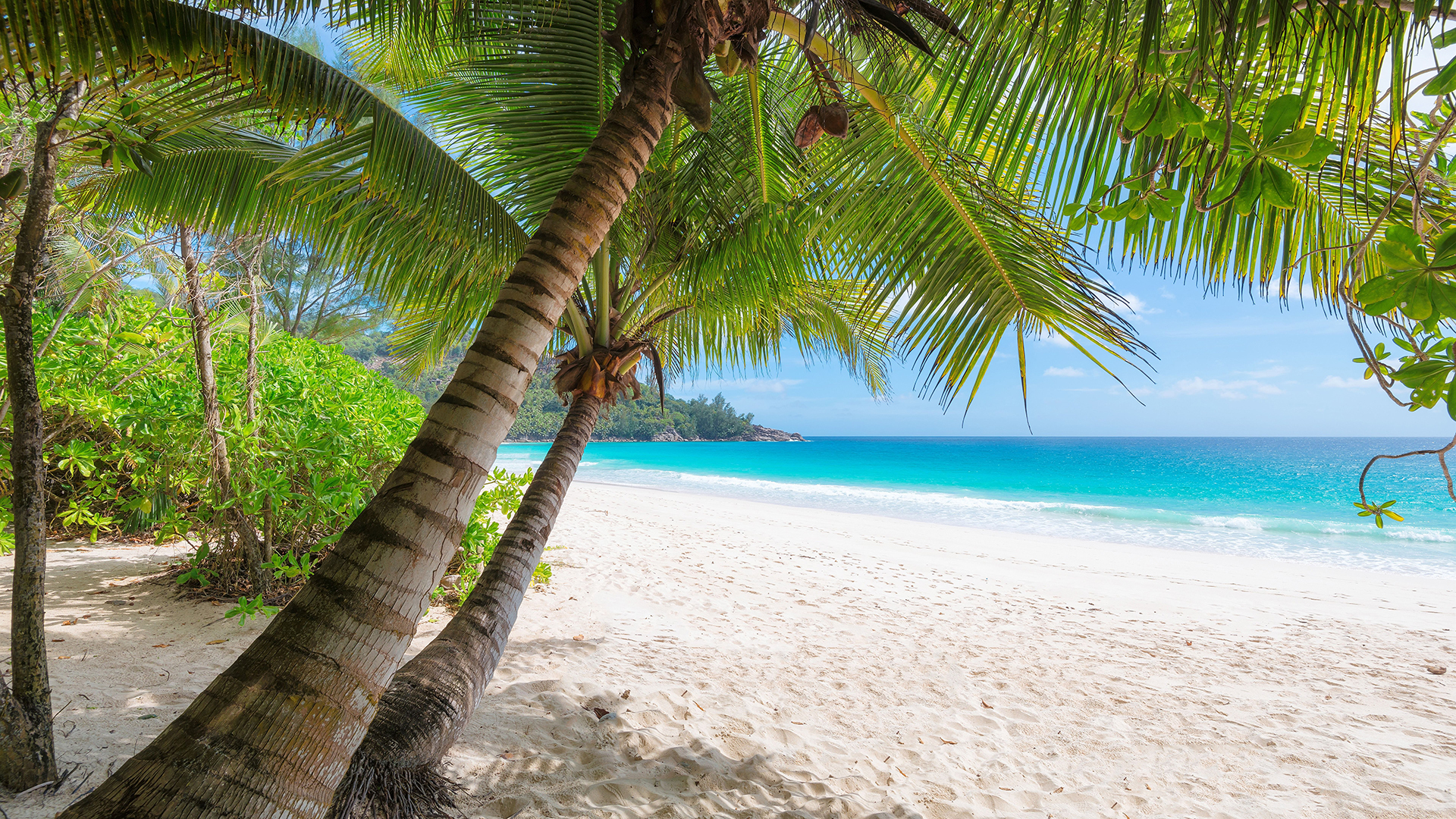 Tropical beach with palm trees. Virtual background to use on Zoom, Microsoft Teams, Skype, Google Meet, WebEx or any other compatible app.
