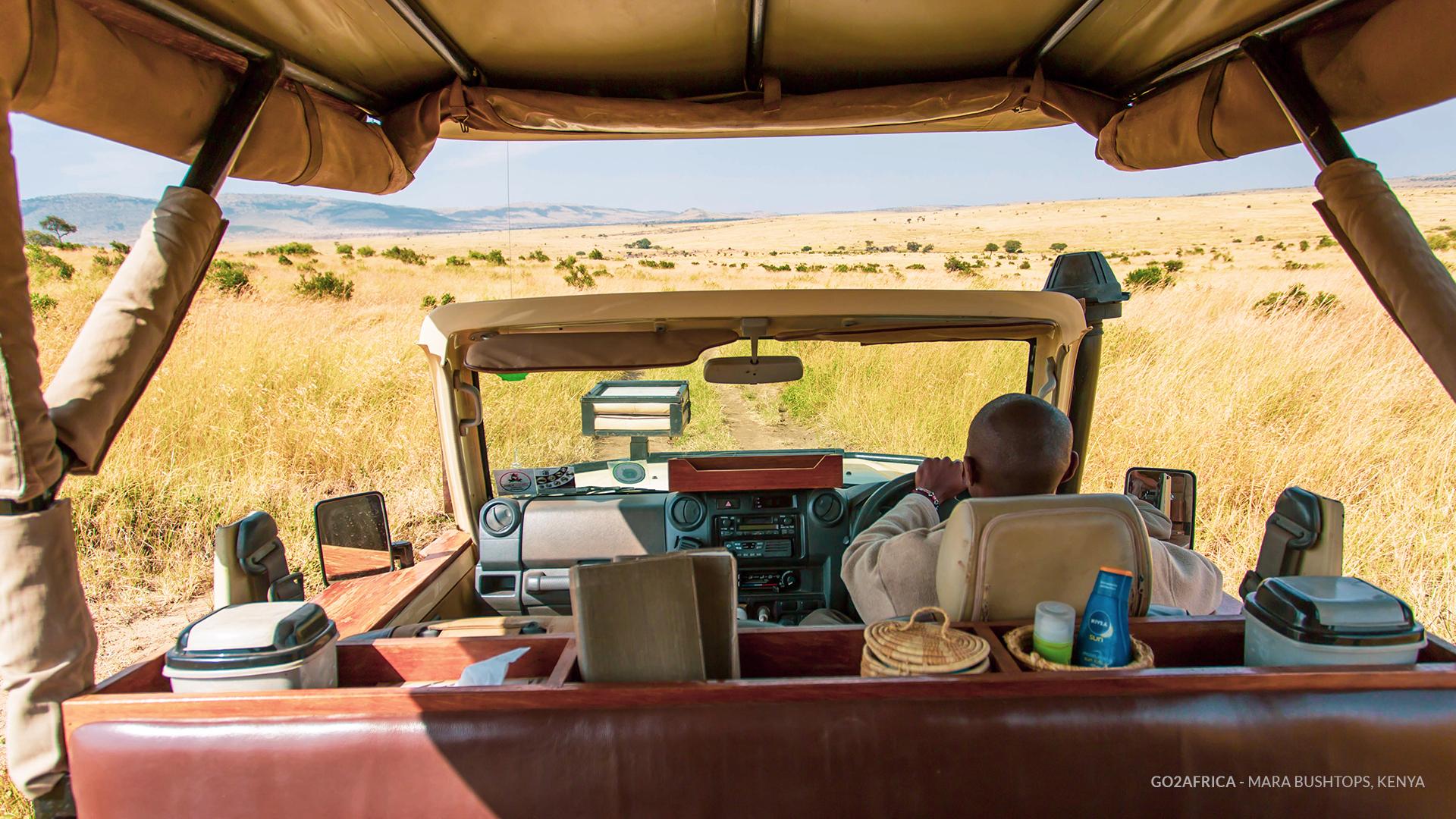 Safari na reserva de Maasai Mara. Fundo virtual gratuito para Zoom, Microsoft Teams, Skype, Google Meet e WebEx ou qualquer outra aplicação compatível.