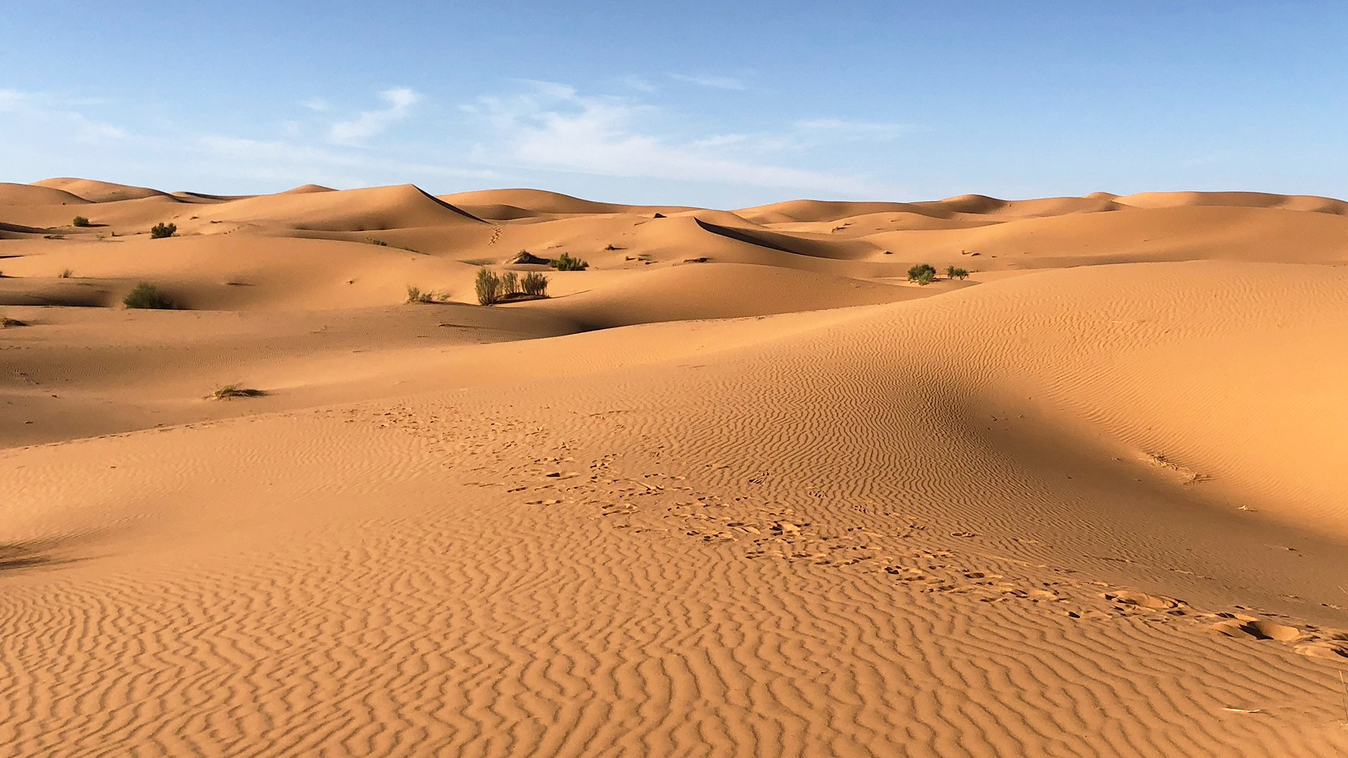 Sahara desert. Virtual background to use on Zoom, Microsoft Teams, Skype, Google Meet, WebEx or any other campatible app.